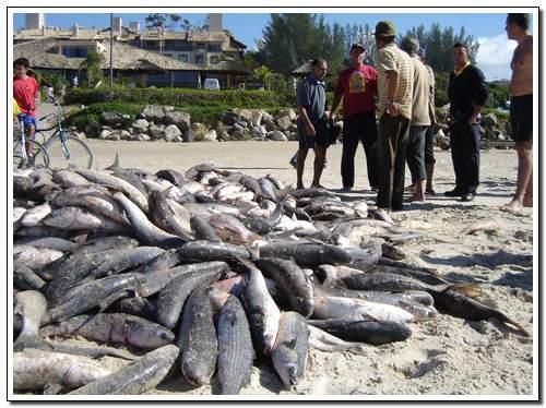 pesca da tainha