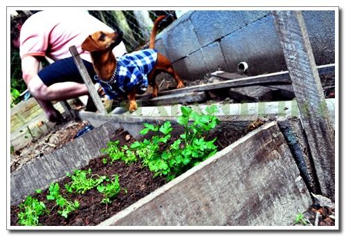 canteiro de ervas